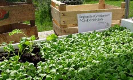 Bild einer Kiste mit vorgezogenen Pflanzen
